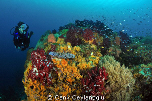 Colors of the sea by Cenk Ceylanoglu 